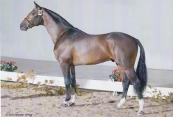 Contendro II (Contender x Reichsgraf)